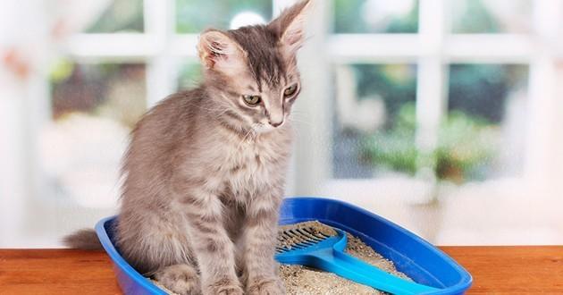 rendre mon chat propre