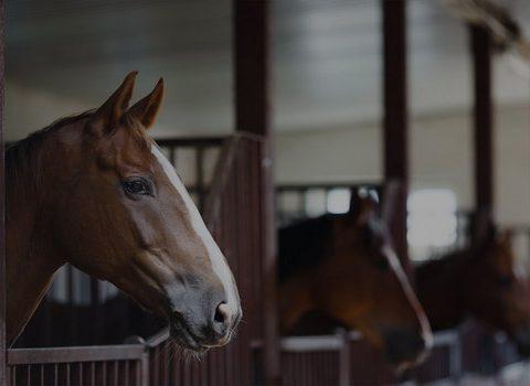 référencement pension pour chevaux